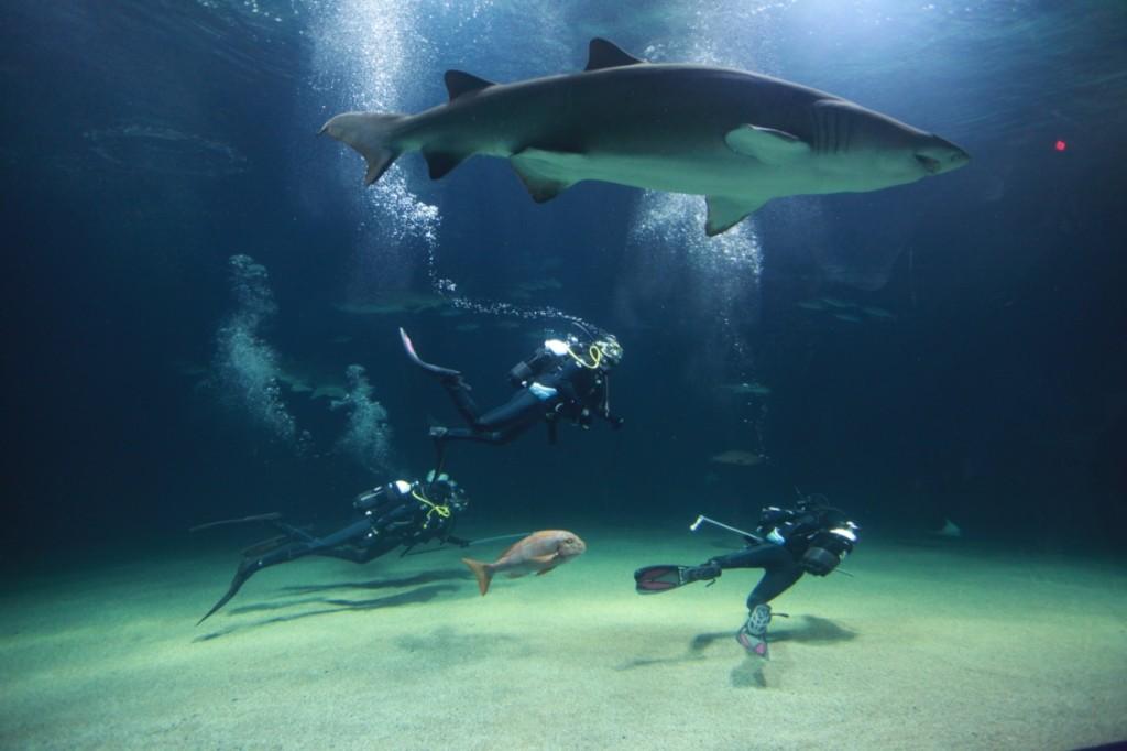 sharks in Valencia