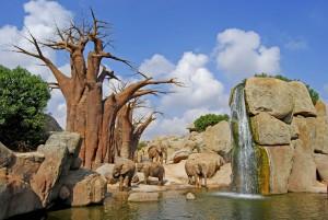 Bioparc-Valencia-manada-elefantes2