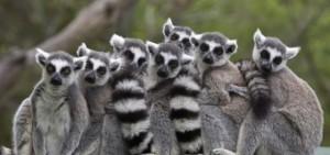 lemures-640x300