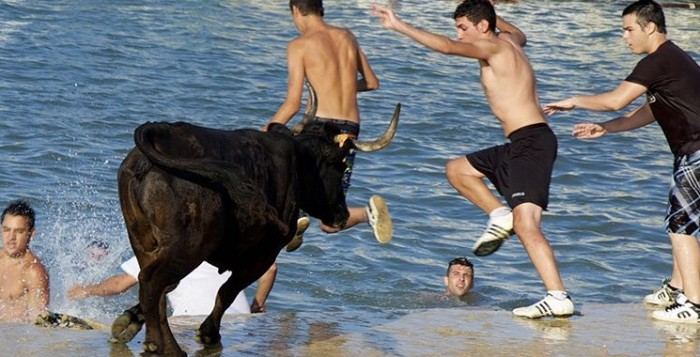 Photo de la charge d'un taureau lors de la Bous a La Mar