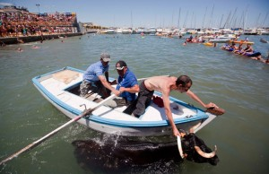 Le taureau est ramené sur la berge à l'aide d'un bateau et d'une corde