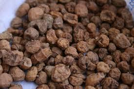 récolte de chufas qui serviront à faire de l'horchata