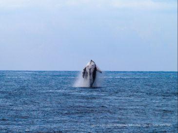Baleine pas loin de la côte de Dénia