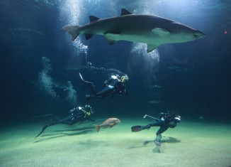 Plongée avec les requins au musée Oceanografic de Valence