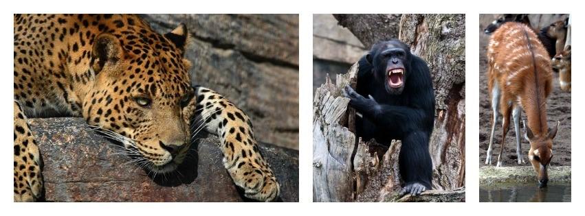 Un zoo dédié aux animaux africains en plein valence